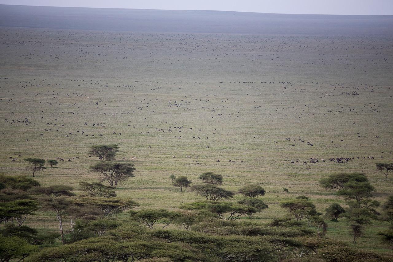 serengeti11