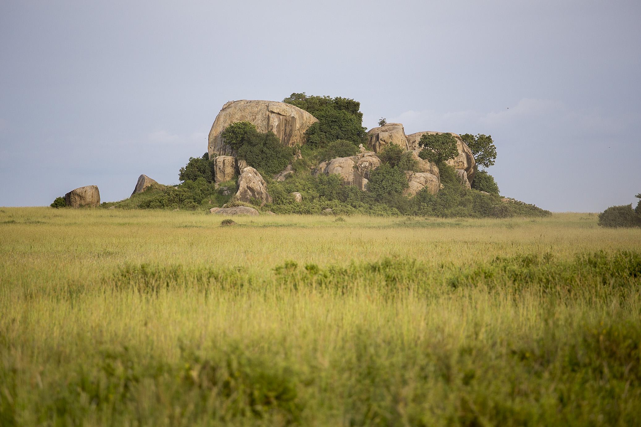 serengeti15