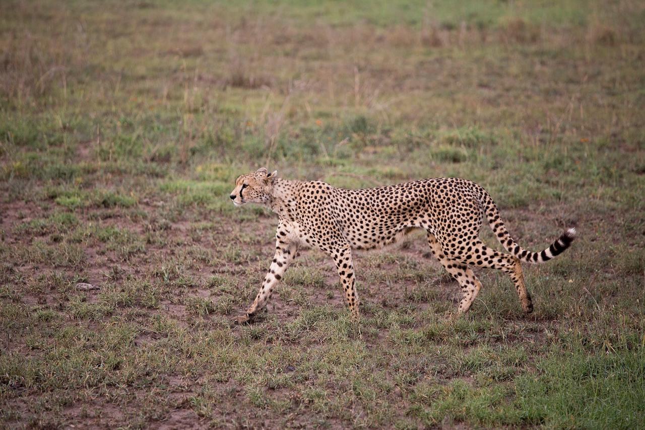 serengeti22