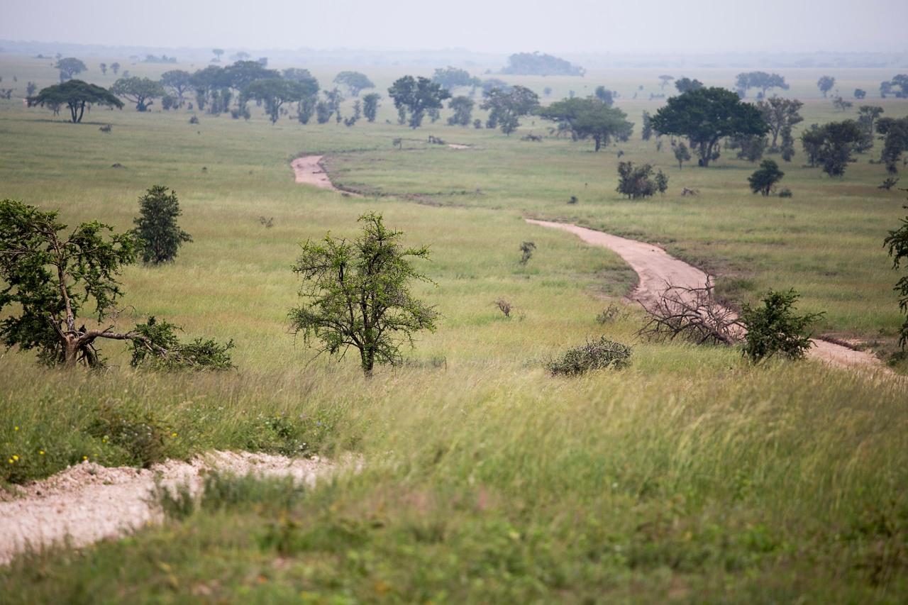 serengeti26