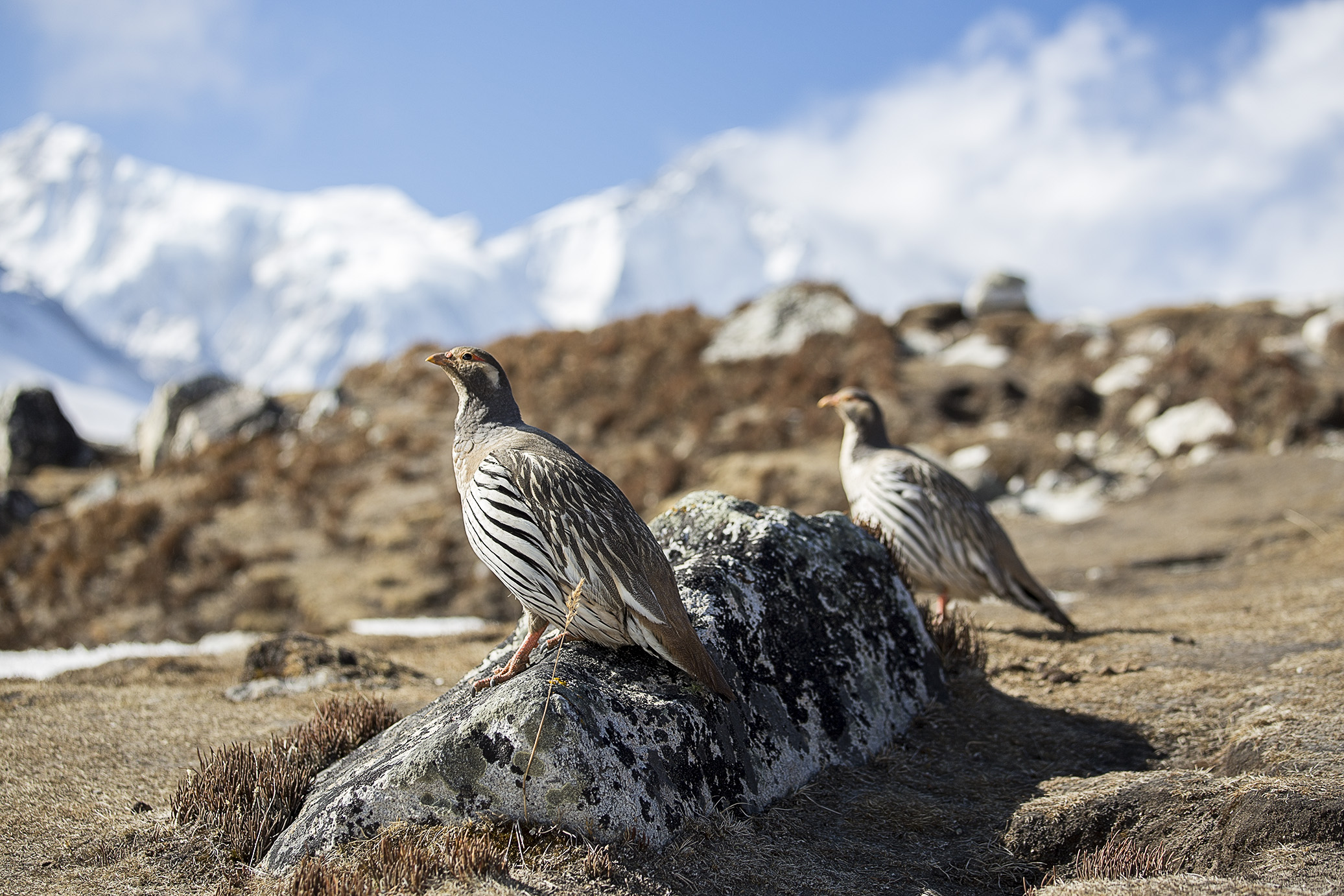 nepalhimalaya28